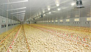 Consumo récord de carne de pollo en julio