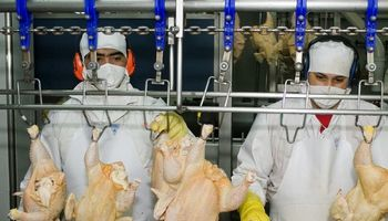 Nuevo control para la exportación de carne aviar y subproductos