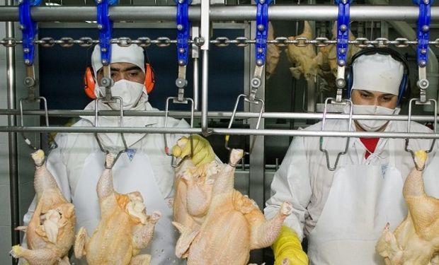 Exportación de carne aviar.