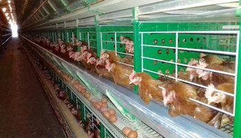Simplifican trámites para los productores avícolas en Buenos Aires