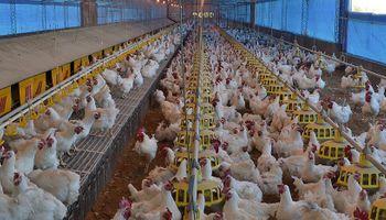 Frigorífico del norte santafesino amplía 40% su planta para atender la demanda de carnes china
