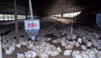 La producción de carne aviar creció 2,2 por ciento en 2017