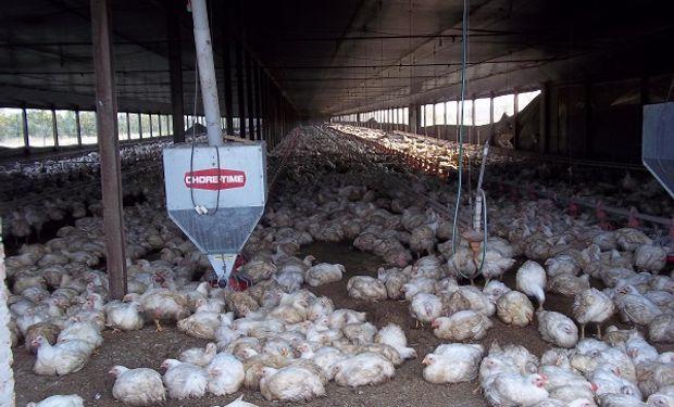 El kilo de pollo terminó vendiéndose a fin de año a un promedio de $ 38,88.