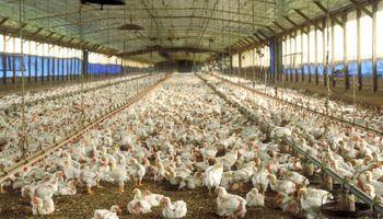 Venezuela pagó un 45% más por pollos argentinos