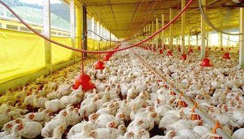 En lo que va del año creció la produccion y consumo de pollo