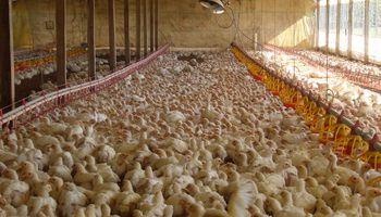 Por los precios, aumentó 4,6% el consumo interno de pollo en lo que va del año