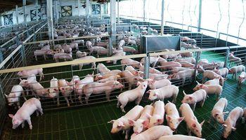 Cuatro provincias producen el 82% de la carne de cerdo del país