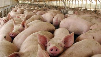 Se realizó una nueva jornada de capacitación porcina
