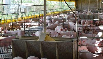 """Inversiones chinas para la producción de cerdo: """"Ya acordamos el contenido del memorándum"""""""