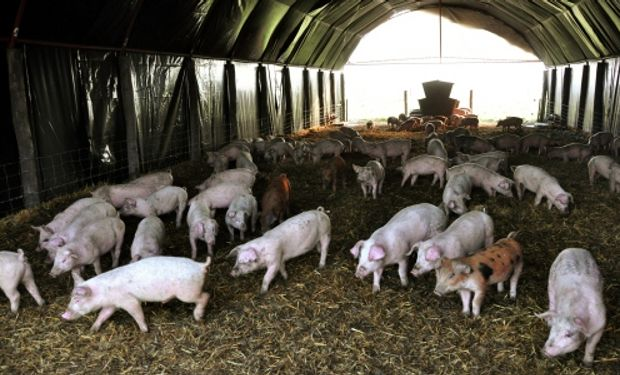 Jornada de Producción Porcina organizada para el 28 de octubre en la Colonia Ortiz Basualdo, Las Armas.