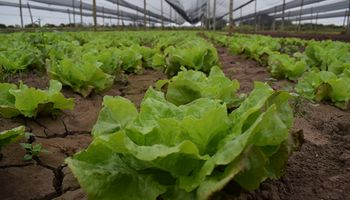 Agricultura periurbana: ¿Por qué es importante planificar?
