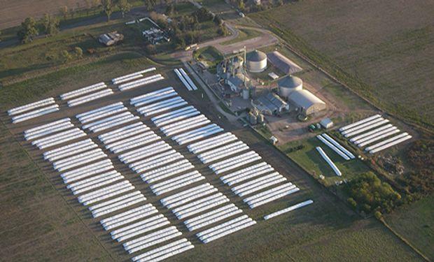 Tecnologías y pautas para almacenar el grano húmedo en silo bolsa.