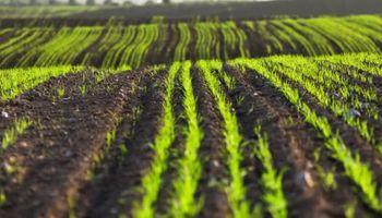 Cómo aplicar la bioeconomía para ser exitoso: los casos santafesinos