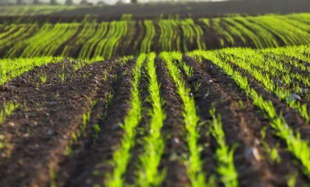 La bioeconomía puede entenderse como un sistema de creación de valor sustentable y altamente eficiente.