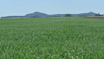 ¿Se viene el potasio? Uno de los temas clave de Fertilizar en el Congreso Aapresid 2020
