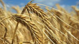 Inflación: los alimentos en el mundo aumentaron un 31% en un año