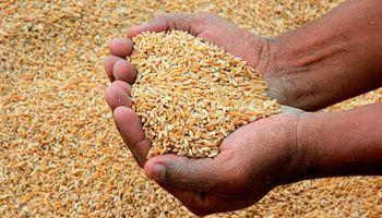 Precios de alimentos registran el nivel más bajo en cinco años