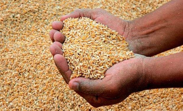 Según la Organización de Naciones Unidas para la Agricultura y la Alimentación (FAO).