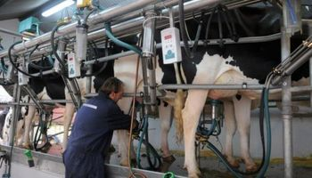 Pese a las promesas del Gobierno, vuelve a bajar la leche en el tambo