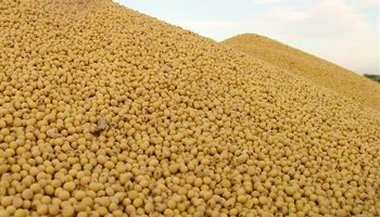 Precio de la soja en el mercado local seguirá debilitado