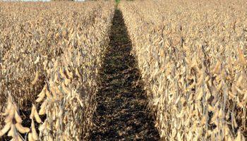 Baja en el precio de la soja provoca pérdidas en Uruguay