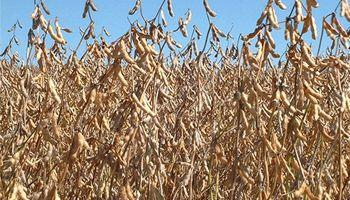 Precio de los granos se acerca a una meseta