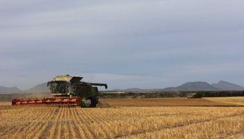 Australia tuvo la peor cosecha de trigo en 12 años y hay subas de US$ 4 en Chicago