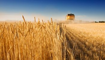Medida para el trigo resulta positiva pero a destiempo