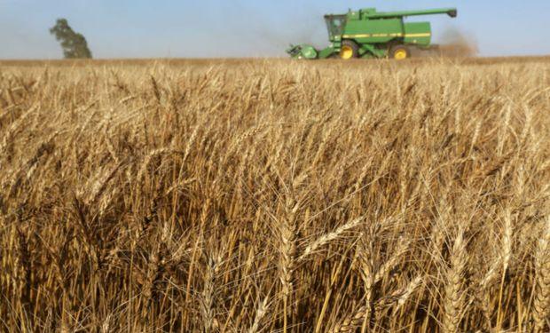 El índice de precios de los cereales se mantuvo en general estable en 178,4 puntos en octubre.