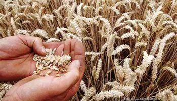 Noveno aumento consecutivo para el precio global de los alimentos: la mayor cosecha no logra compensar a la demanda