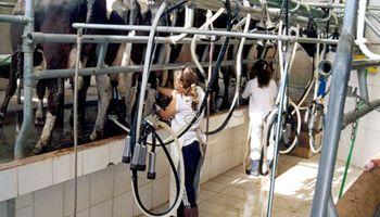 La leche mantiene sus precios internacionales