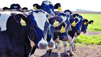 Días claves en la definición del precio de la leche
