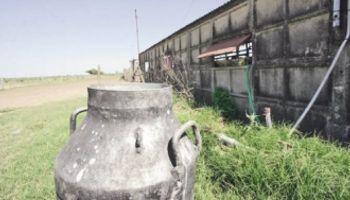 En Uruguay, Fondo de Estabilización atenúa caída de la leche
