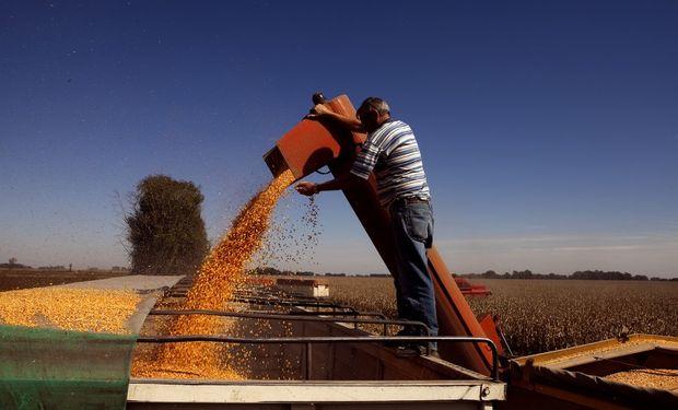 Suben los cereales en Chicago y el mercado local acompaña