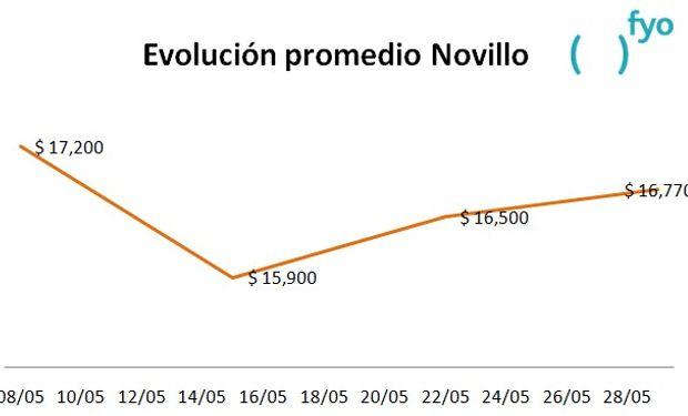 El gráfico muestra la evolución del precio promedio de la categoría Novillo en el Mercado de Liniers durante el mes de mayo. Fuente: fyo