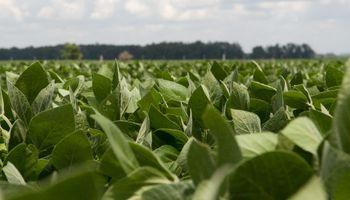 Agroindustria definió el precio promedio para productores de soja del Plan Belgrano
