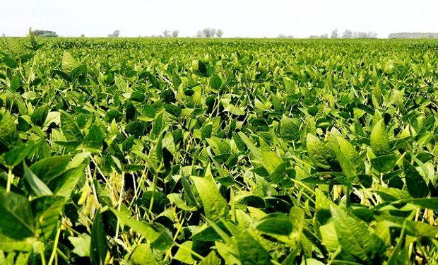 Fuertes subas en Chicago impulsaron al precio de la soja en Rosario