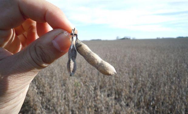 Cuánto cobra un productor de soja en Uruguay, Brasil, Paraguay y Estados Unidos vs el argentino