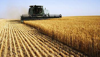 Nuevas bajas para el trigo por el avance de la cosecha en el hemisferio norte