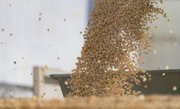 Precios estables en el mercado de granos local sin la referencia externa