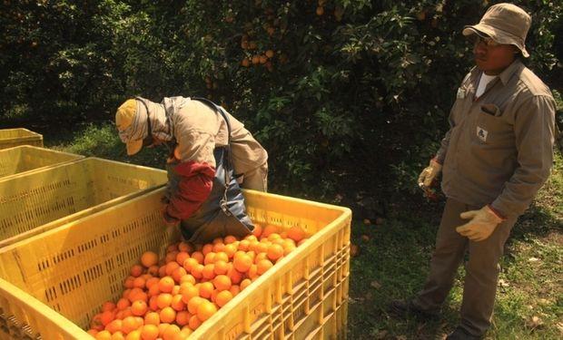 La brecha de precios de los productos agropecuarios fue de 5,29 veces en mayo.