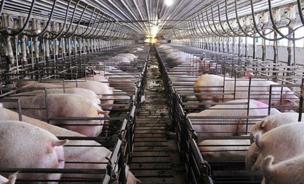 La tendencia mundial en sanidad porcina está llevando a los países a restringir, e incluso descartar, el uso de antibióticos.