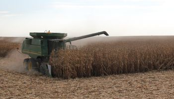 Premios para el maíz en plena cosecha