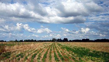 Brasil: caída de precios y sequía preocupa a productores