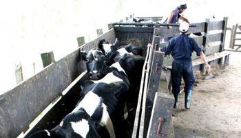 Uruguay: preparan cobro del crédito puente para asistir a la lechería