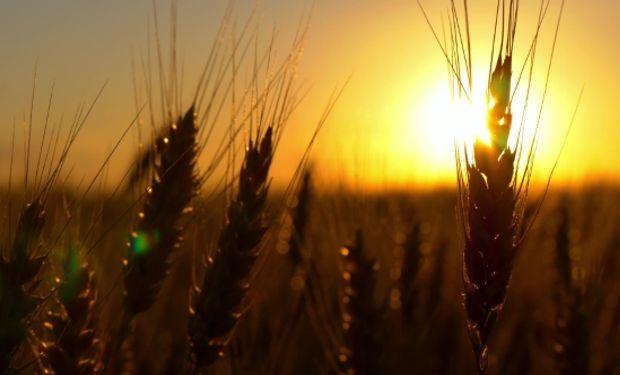 La siembra de trigo apunta a 6,8 millones de hectáreas.
