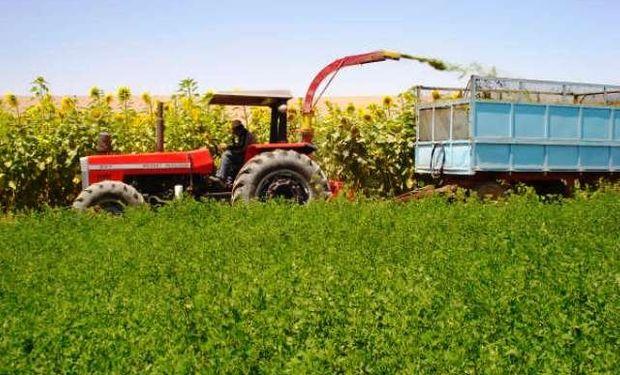 El desarrollo agrícola favorece el consumo interno.