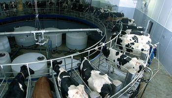 Producción láctea: hay perspectivas de crecimiento para 2021