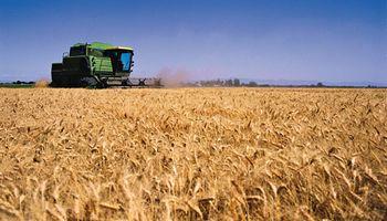 Ciclo 2015/16: cae la producción de granos