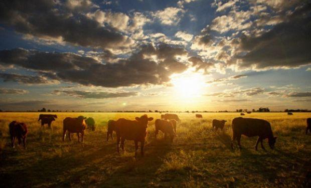 Producción del agro récord en el Uruguay